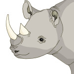 10 - Rhino line drawing