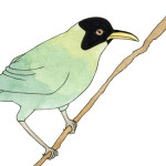 4 - green honeycreeper